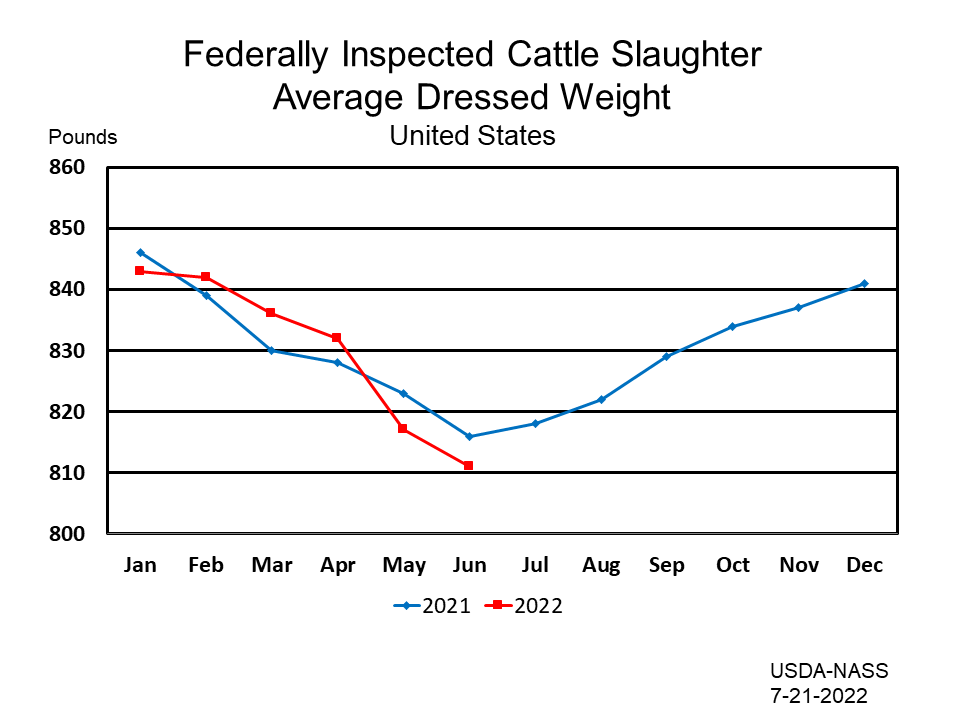 Federally Inspected Cattle Slaughter