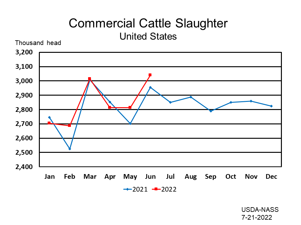 Commercial Cattle Slaughter