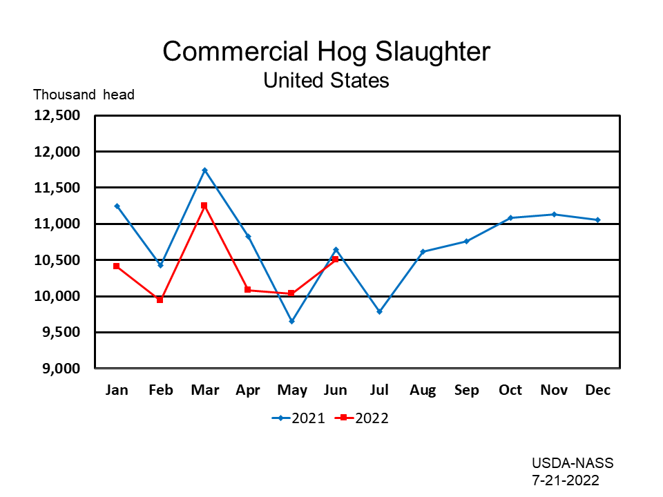 Commercial Hog Slaughter