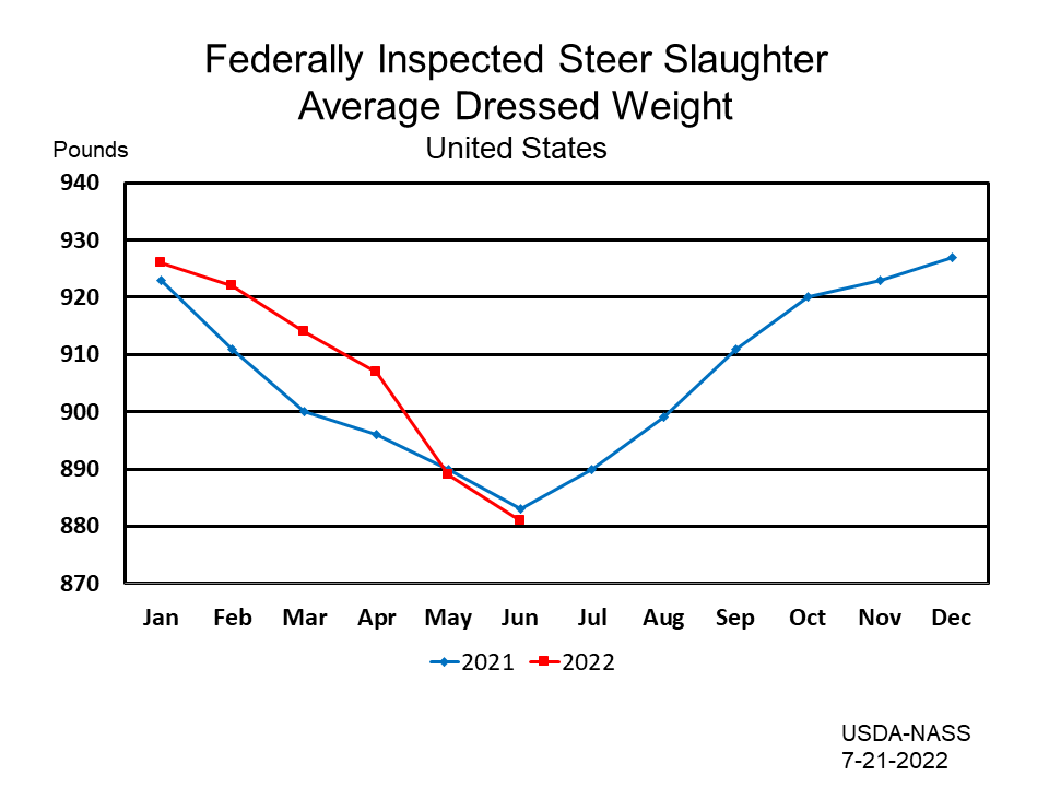 Federally Inspected Steer Slaughter