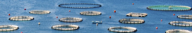 Census of Aquaculture